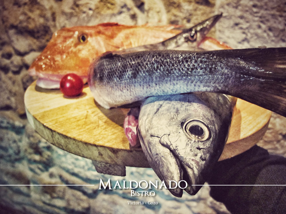 Daily catch of fresh fish maldonado bistro for Daily fresh fish